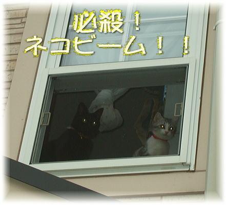 ネコビーム発射!