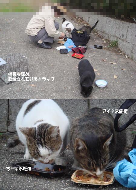 6匹の猫たちがいます