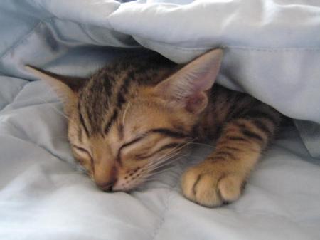 sleeping oct 26