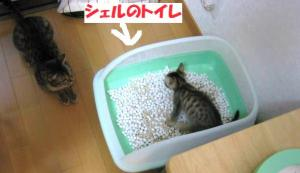 bathroom_.jpg