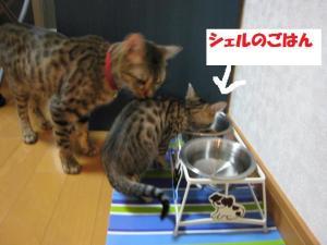 food+bowl.jpg