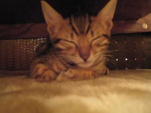 sleepy_.jpg