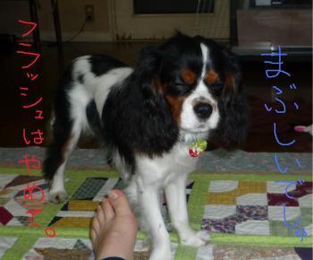 まぶしぃ_convert_20090428000844