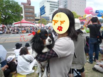 花_convert_20090505225120