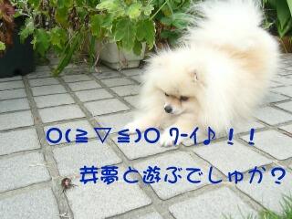 P1100441.jpg