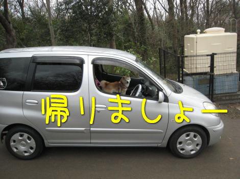 運転しちゃうよ~。