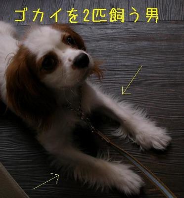 B_GOKAI_2.jpg