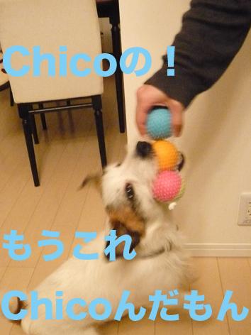Chicoのだ