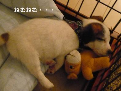 Chiko01.jpg