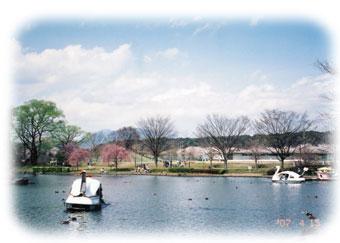 チカ写真池