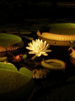 080810夢の島熱帯植物園1