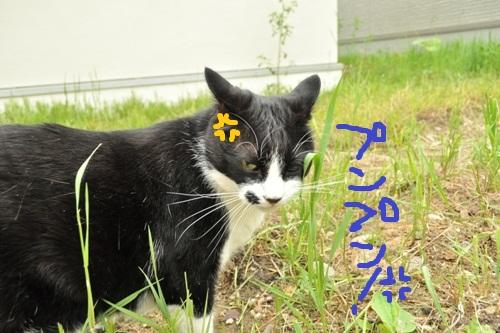 ひろみちゃん128