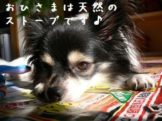 2-9dog-b.jpg