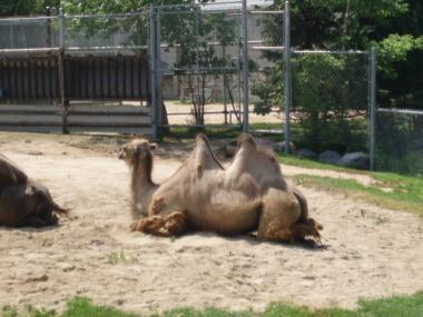 ウィニペグの動物園