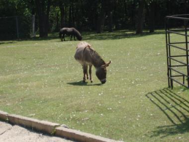 ウィニペグの動物園2
