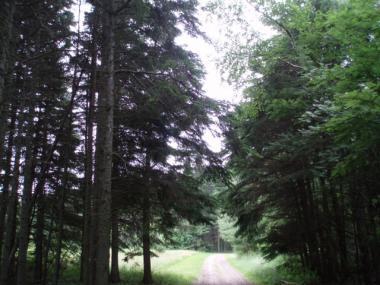 お化けの森2