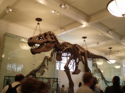 アメリカ自然史博物館3