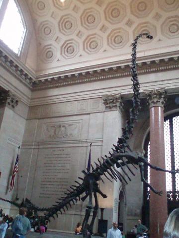 アメリカ自然史博物館4