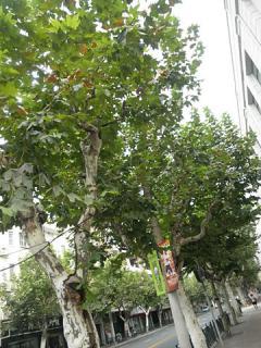 2011_09170514.jpg