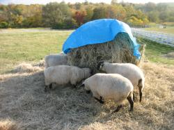 丸加高原の羊たち(^^)