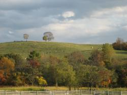 向こうの丘の斜面にいるのは・・・牛さんですよね?