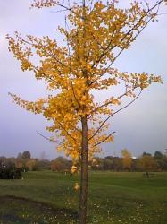こちらは黄色です(^^)