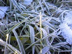 草に霜 寒くなってきましたね。