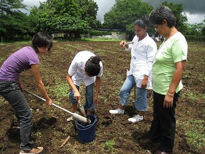 土壌サンプリング