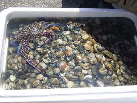 アサリと渡り蟹
