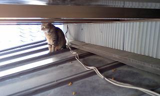 脱走した我が家の猫