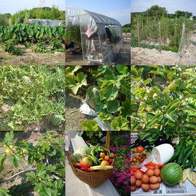 08年8月夏の収穫