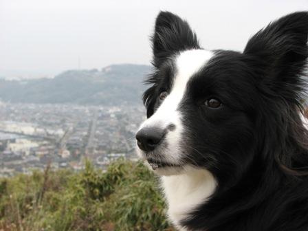 山に登りました。