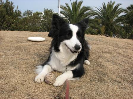 他犬のものはアタシのものよ