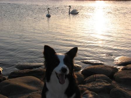 犬の湖??