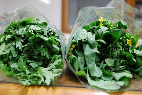 DSC_0198 1212春菊&菜の花