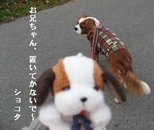 ショコラ 014散歩1