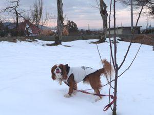 P1000172雪