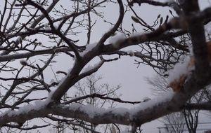 P1000192雪