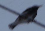 P1000202鳥