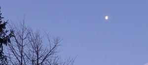 P1000265朝の月