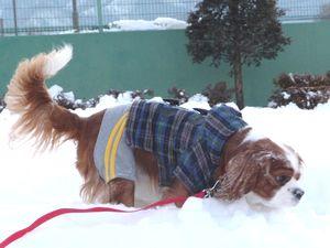 P1000271雪遊び