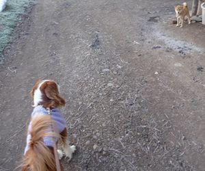 P1000429柴犬