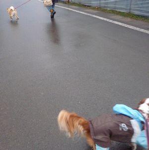 P1000641柴犬