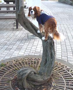 P1010067藤の木
