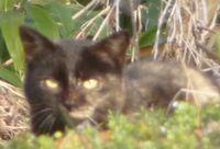 P1010204黒猫