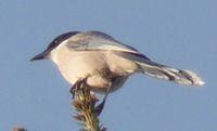 P1010231小鳥
