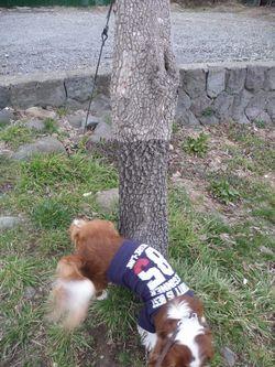 P1010248柿の木