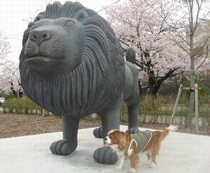 ショコラ 030ライオン