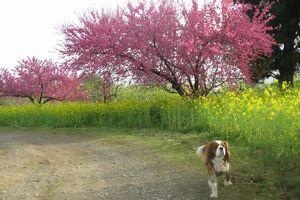 ショコラ 011公園