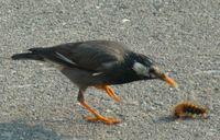P1000112小鳥